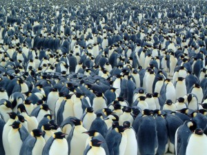 penguins-795082